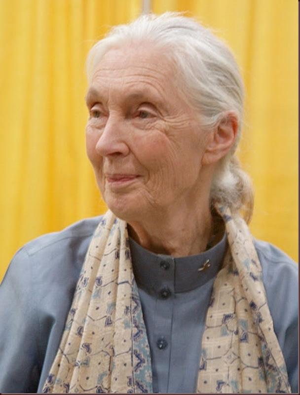 Jane_Goodall_naturalista_y_primatóloga_inglesa