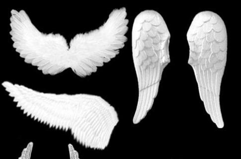 Pinceles de alas blancas de ángel