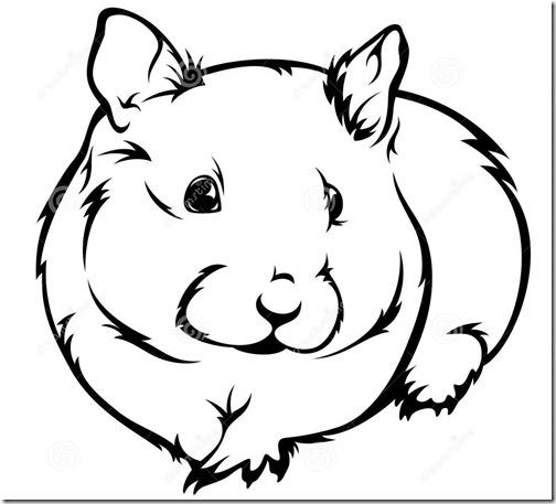 hamster grande imagen (9)