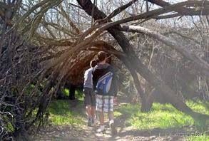 Mesquite Canopy