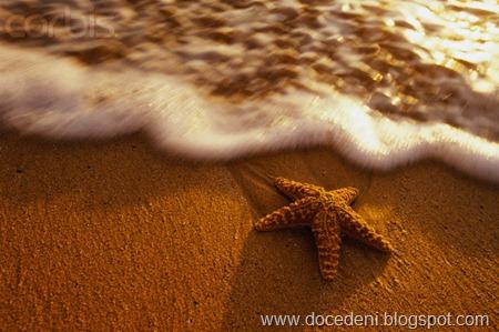 estrela do mar2