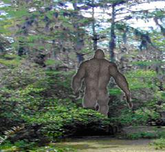 Bigfoot in Swamp