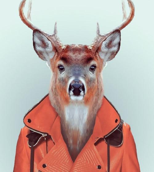 animais roupas humanas - veado
