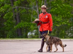 police-dog of Deceased Mountie