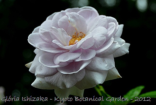 Glória Ishizaka -   Kyoto Botanical Garden 2012 - 133