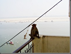 Varanasi Affe auf dem Balkon