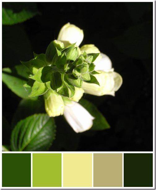 dovenetel--kleurenbalk