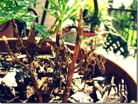dead_flower
