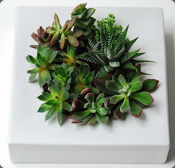 Crater-Terrarium-Top seed floral