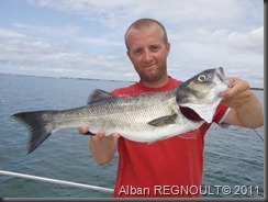 SMITH_dragonbait_sea bass_bar_3