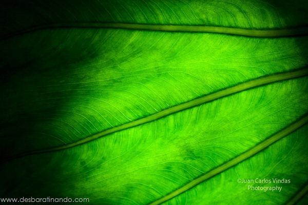 natureze-nature-padrao-pattern-desbaratinando (2)