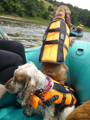 Pets adventure 17 (162)