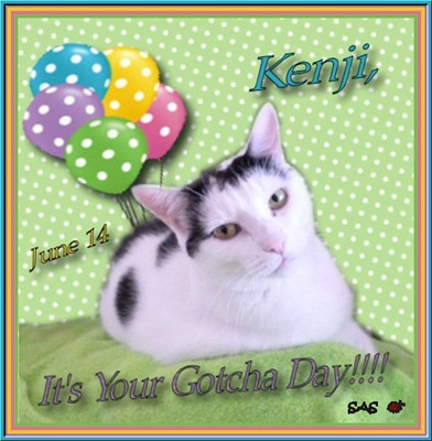 Kenji gotcha day