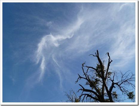 111231_tree_silhouette_5