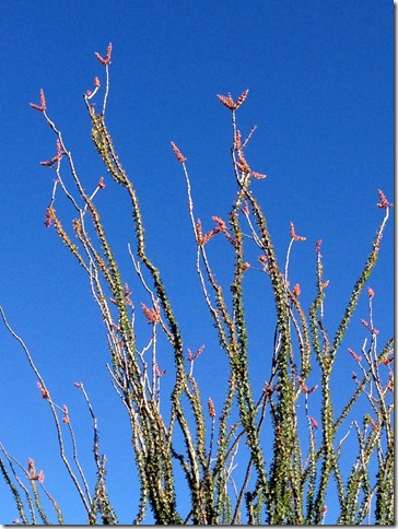 Ocotillo 4-11-2013 8-03-46 AM 2448x3264