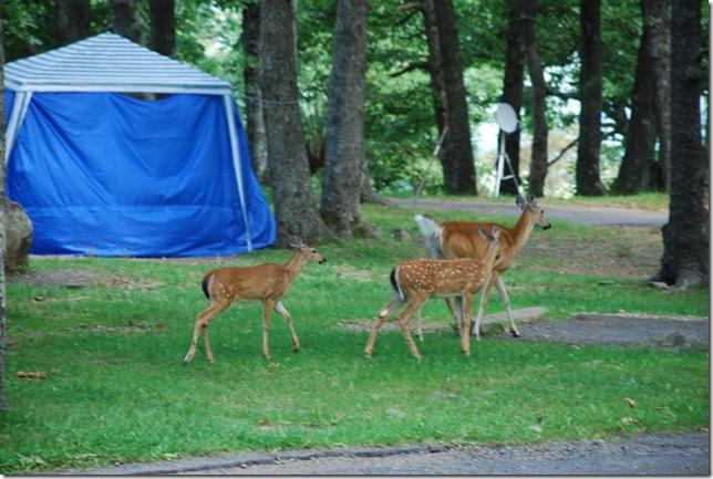 08-22-2011 B Shenandoah NP 020