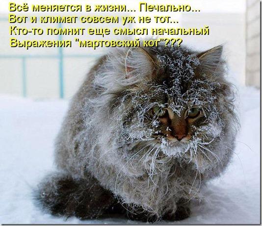 kotomatritsa_ZB