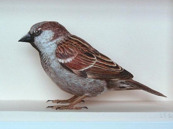 Pássaros_papel (6)