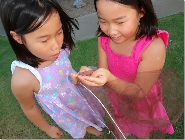Butterfly Nets 024