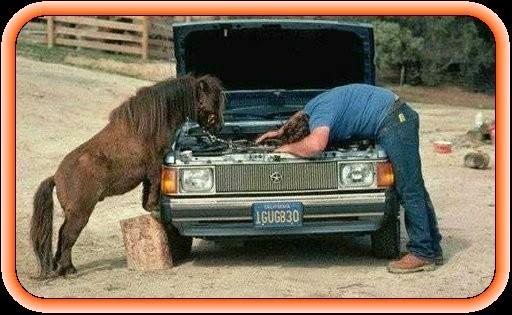 Horse Fixing Car