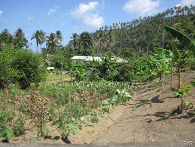 Gartenanbau