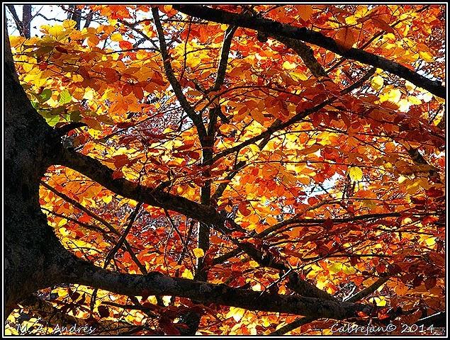 Lantz otoño 105