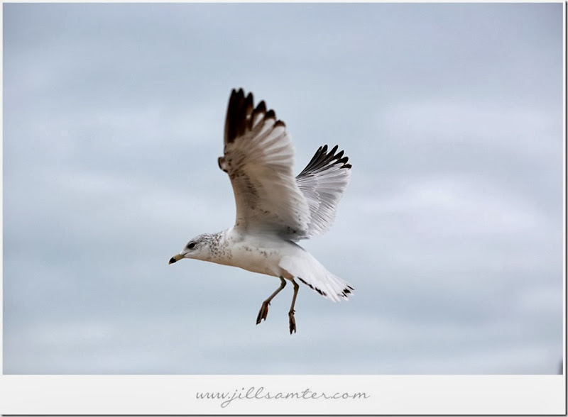 birdstand-fly1