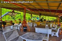 cameron-valley-tea-terrace