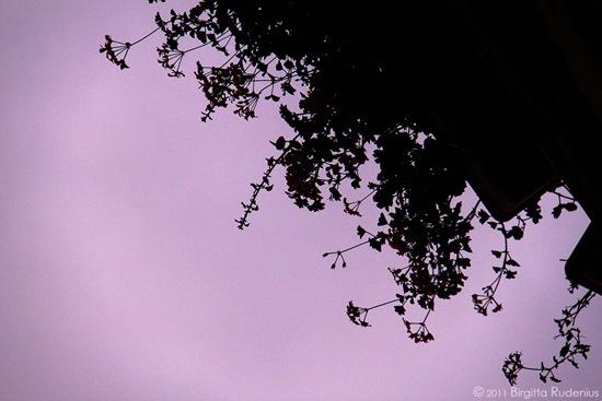 blom_20111011_1