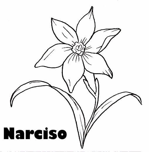 PINTAR FLORES: NARCISOS