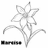 narciso13.jpg