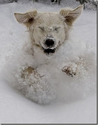 snow-dog1