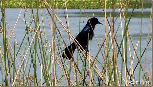 OrlandoWetlands_141