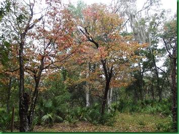 Pat's Island Trail 036