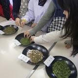 茶種の観察 (2).JPG