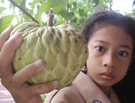 buah-srikaya-aurtralia-dengan-berat-hampir-1-kg