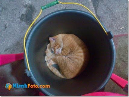 Kucing Pacaran Selingkuh_04