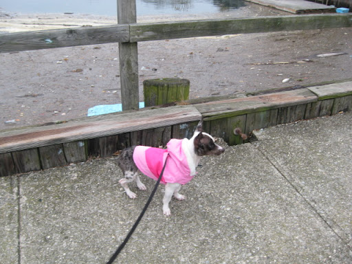 Pepper asks, 'Does this parka make me look fat?'