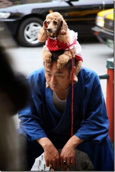 crazy-japanese-people-023