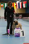 20130511-BMCN-Bullmastiff-Championship-Clubmatch-1683.jpg