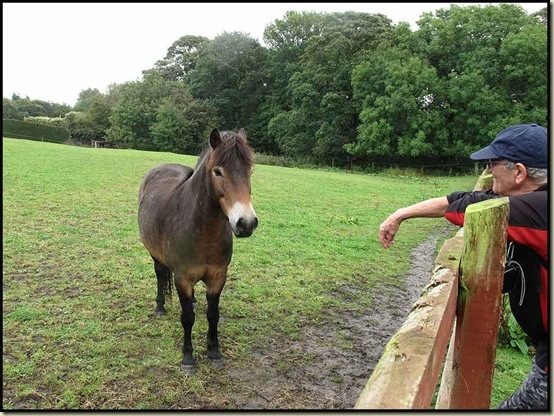 Pony by Great Woolden Hall Farm
