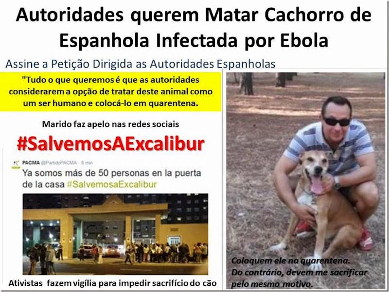 Autoridades querem Matar Cachorro de Espanhola Infectada por