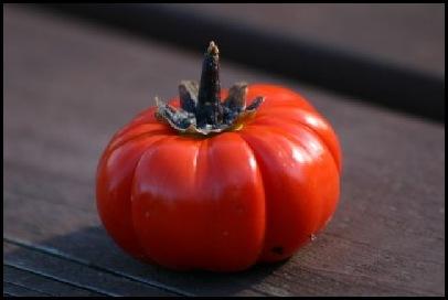 pumpkinstick_10