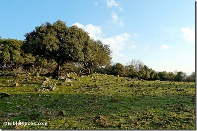 Oak forest on Golan Heights, tb020506169