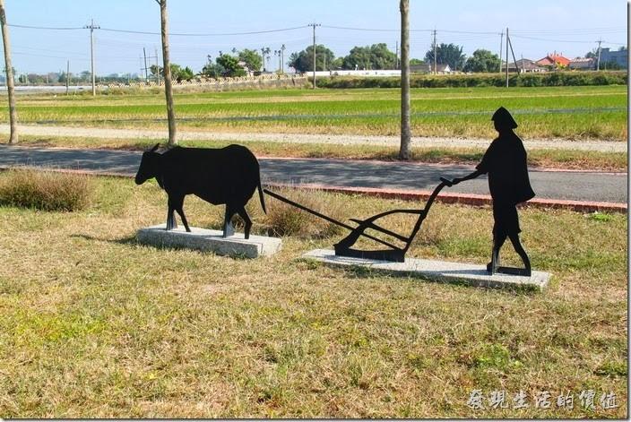 台南-土溝村。老牛耕田。