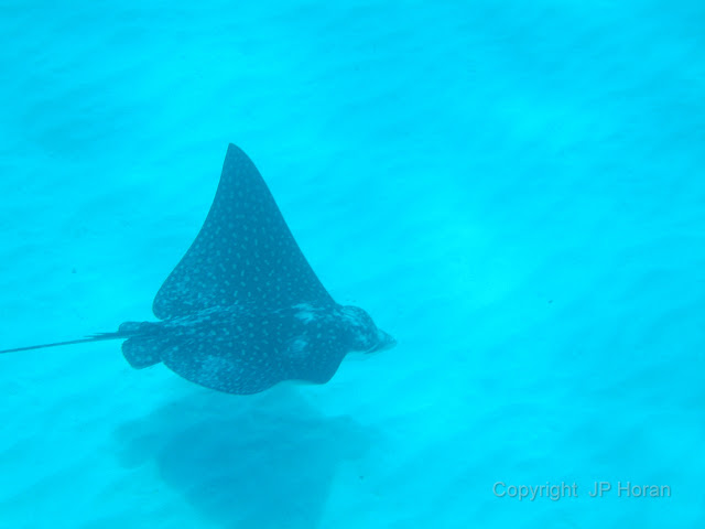 Buck Island Reef - IMGP1256.JPG
