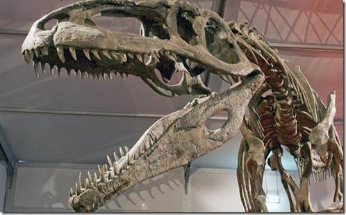 fosilesdinosaurios02