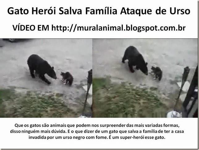 Gato Herói Salva