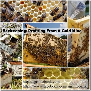 Beekeeping Profiting From A Gold Mine