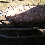 Slitta con pane tipico della zona.JPG